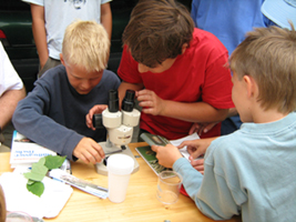 Children along the Danube investigating fauna and flora